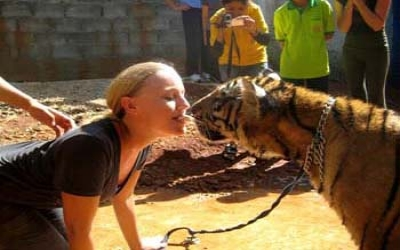 Kissing the tiger